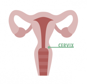 Cervix_graphic2